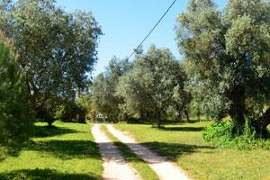 El Camino de Entrada  Picture